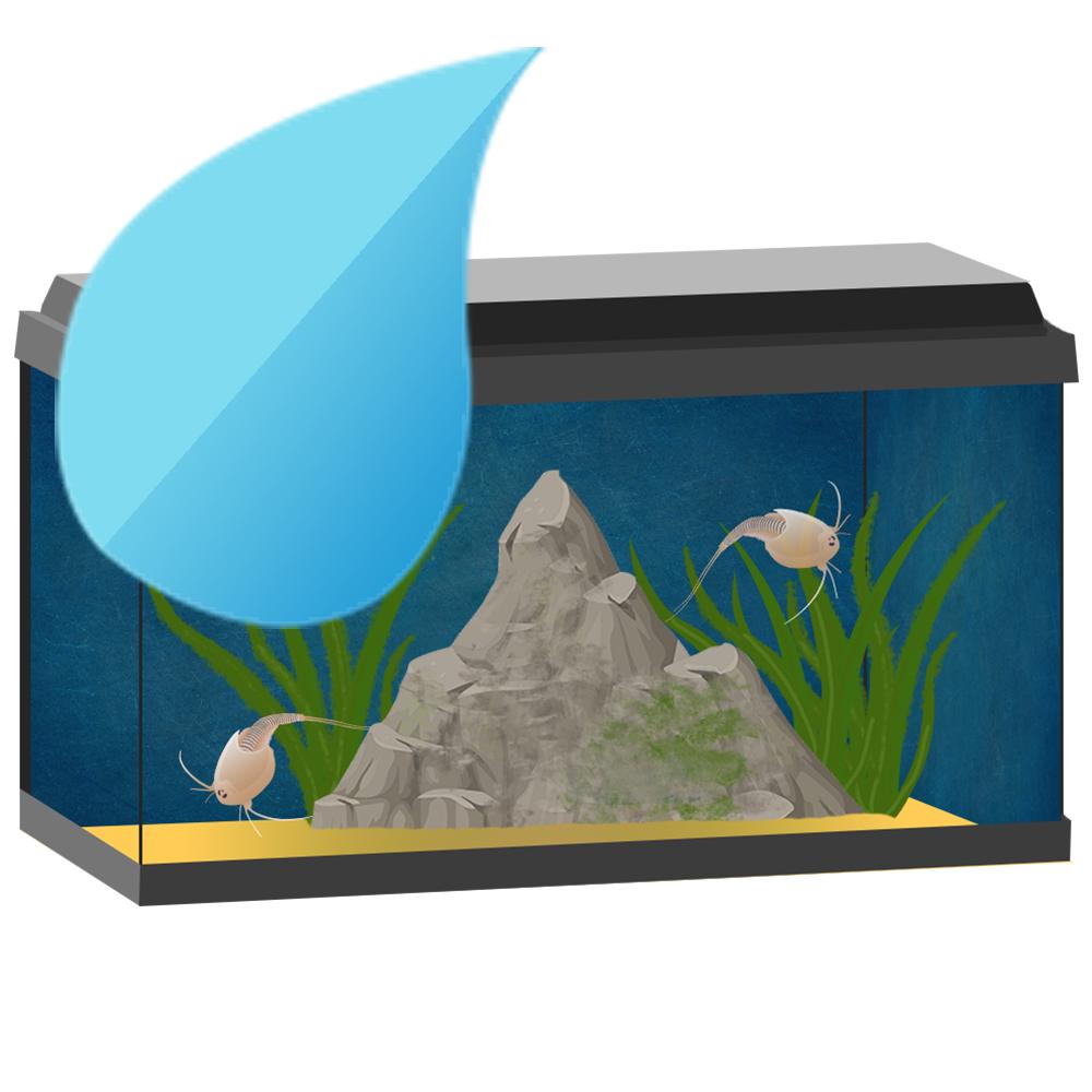 Triopsaquarium_Wasser