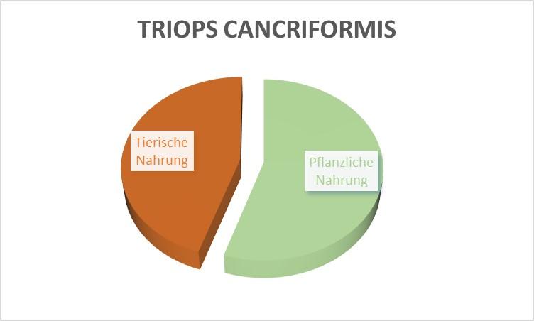 Welches futter für Triops cancriformis?