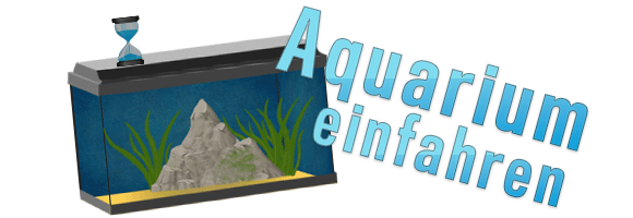 Triops_Aquarium_einfahren