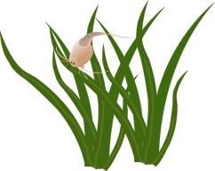 Wasserpflanzen_Triops